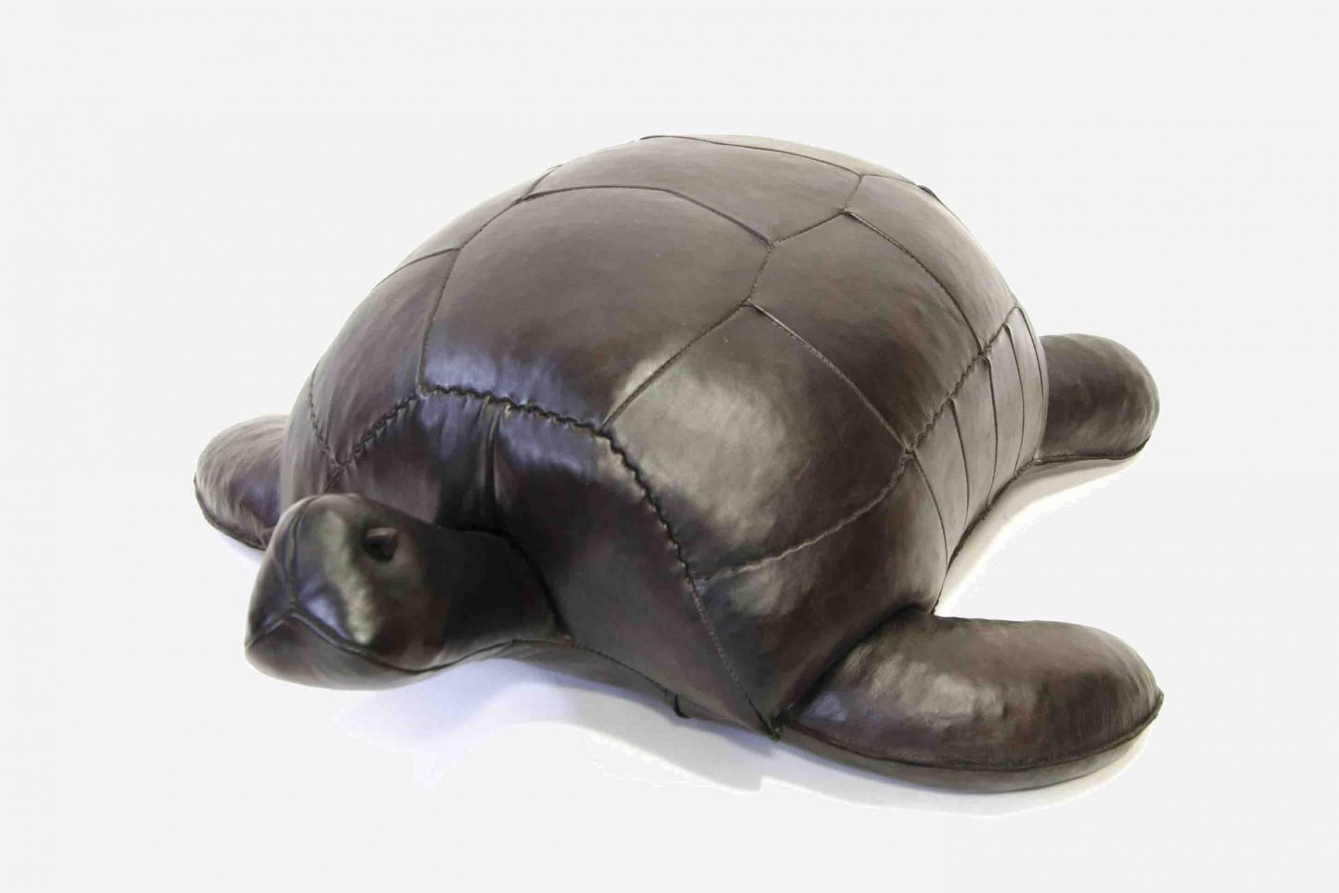 Omersa-Turtle-1